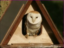 Nest box with owl inside