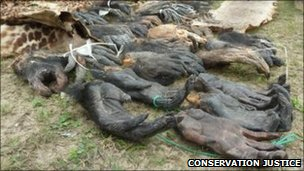 Part of the animal parts seized in Gabon in January 2011