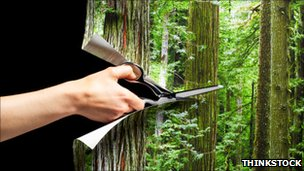 man cutting forest