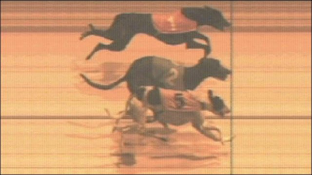 Three-way dead heat at Romford dogs