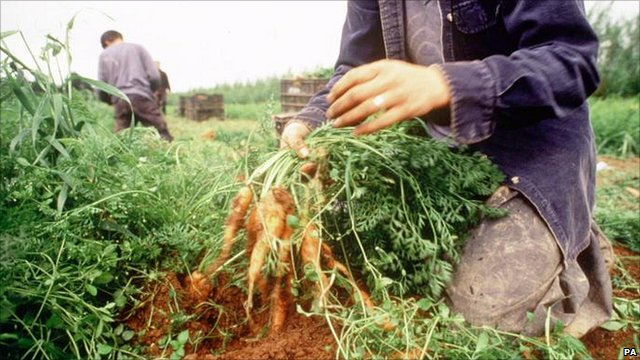 Vegetable farming (file picture)