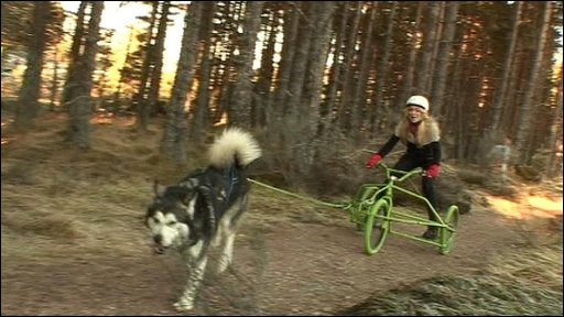 Hayley tries out dog sledding