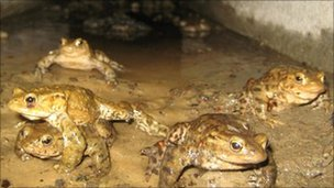 A toad tunnel