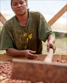 Woman drying cocoa beans