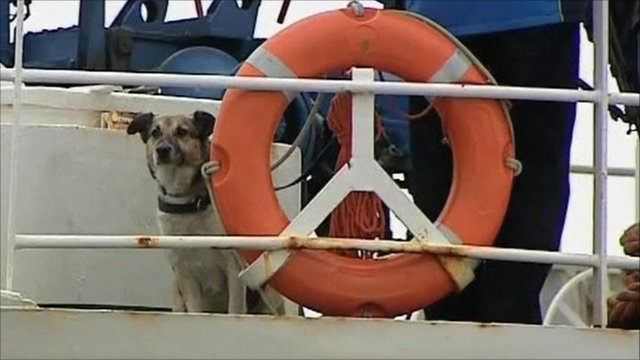 A dog that became stranded on an iceberg in the Baltic Sea has been adopted