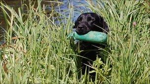 Otley College dog