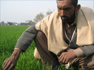 Ghulam Mustafa in his wheat field