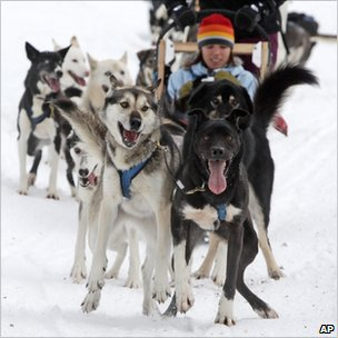 Sled dogs pull tourists during a tour run by Outdoor Adventures in the Soo Valley north of Whistler, British Columbia, Canada, on Monday, Jan. 31, 2011.