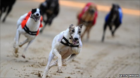 Greyhounds racing.
