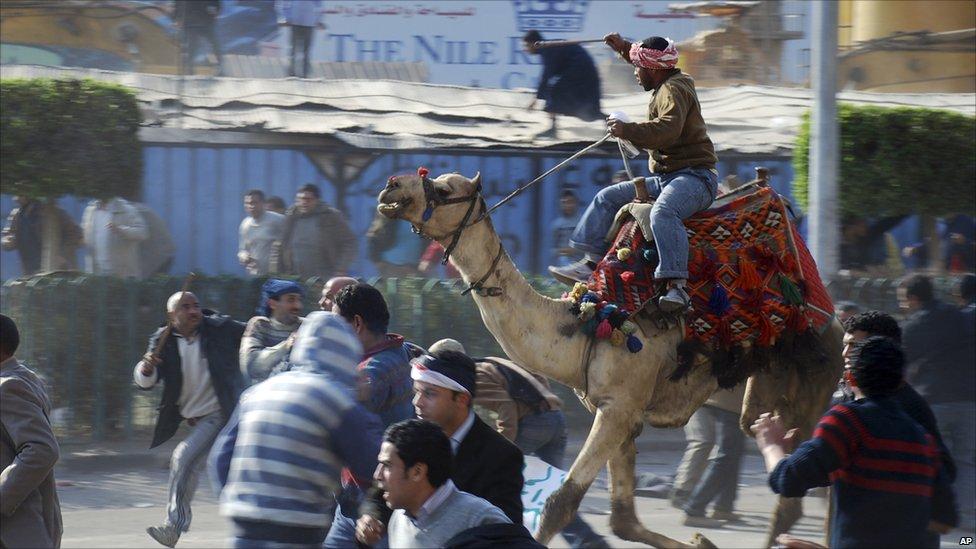 los camellos de mubarack