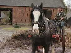 Shire horse at Acton Scott