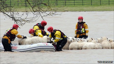 RSPCA workers rescue sheep from flooded fields near Bangor on Dee Racecourse