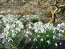 The Garden House's bulb meadow in February
