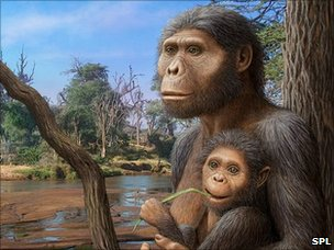 A. afarensis artwork (SPL)