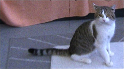 Larry the tabby, the Prime Minister's new cat at Downing Street