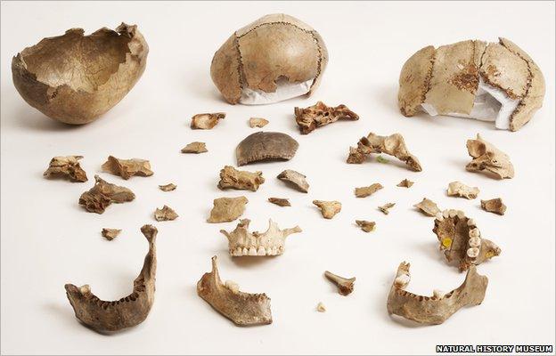 Skull bowls (Natural History Museum)
