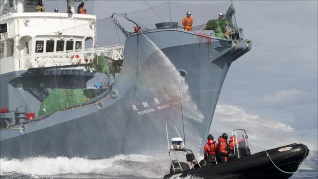 The crew of the Japanese whaling ship aims its water cannon at an anti-whaling activists inflatable boat