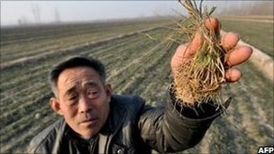 A Chinese farmer shows the dried vegetable seeds at his drought-stricken fields in Shandong province