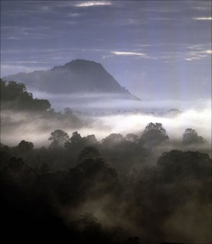View over a tropical forest (Image: BBC)