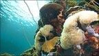 Coral reef in Palau