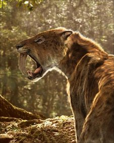 Animation of smilodon from the BBC series, Walking With Beasts