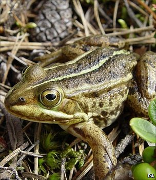 Frog (Image: PA)