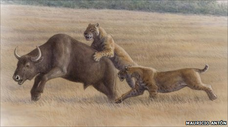 Sabretooth cats hunt a bison (artist's impression)