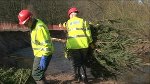 Installing Christmas trees in the Bollin