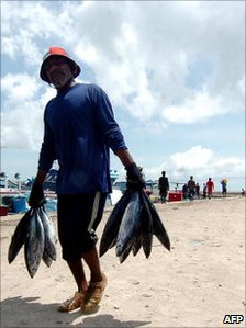 Maldivian fisherman carrying catch