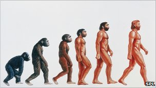 Graphic illustrating Darwin&#039;s origins of man
