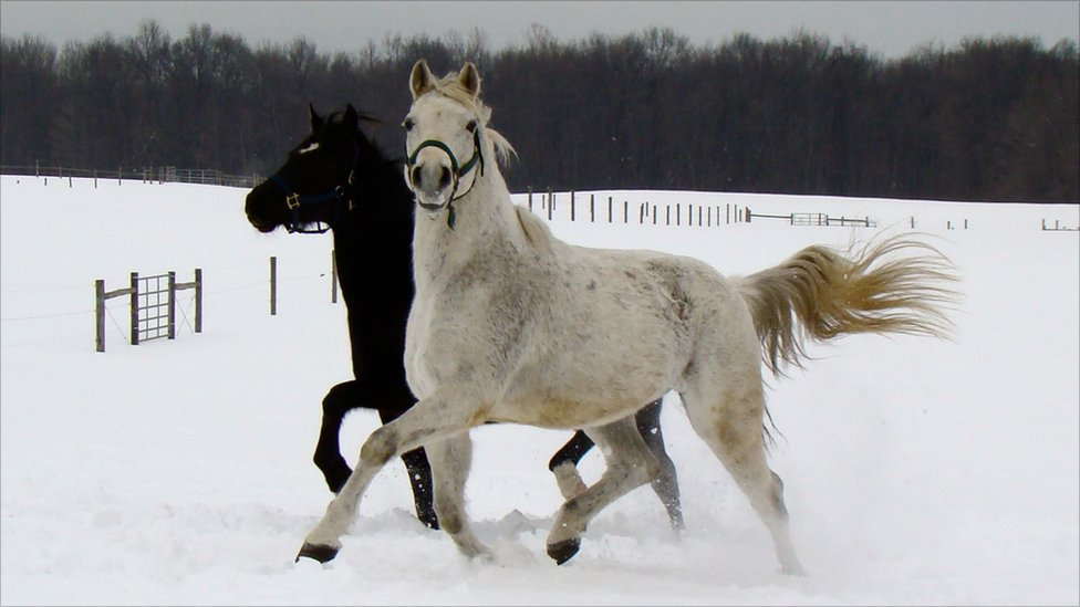 images of horses in black and white - photo #35