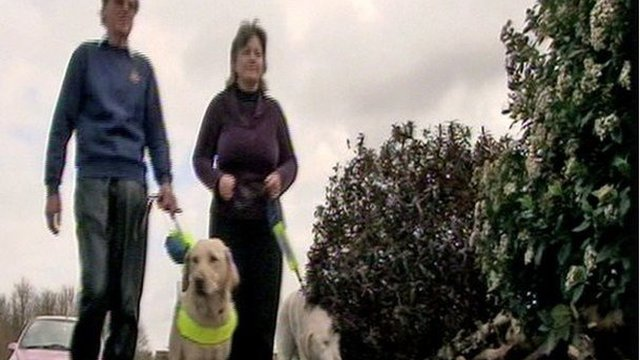 Couple with guide dogs
