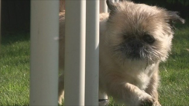 Blue Cross Dog Rescue Southampton