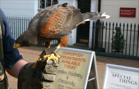 The hawk in the Pantiles