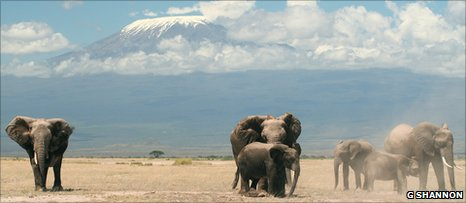 Female African elephants in Amboseli National Park, Kenya (Image: Graeme Shannon)