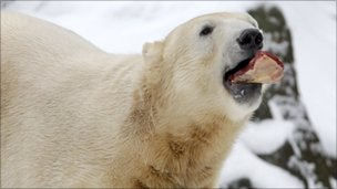 Knut the polar bear, file image from December 5 2010