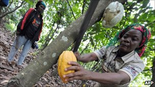 Ivory Coast cocoa farmer (file photo)