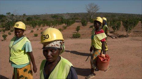 Jatropha farm workers
