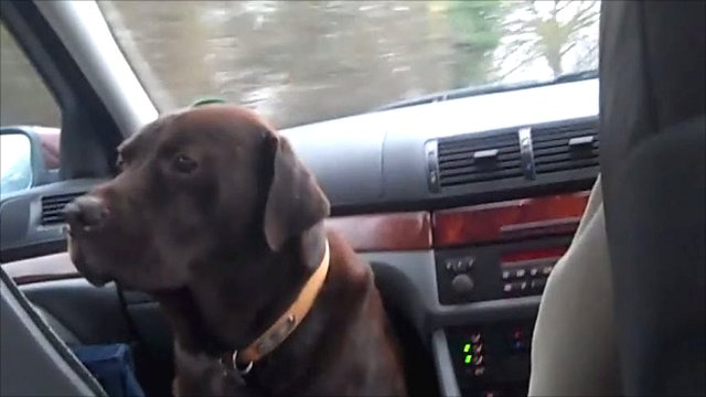 Chico the dog and his journey to school