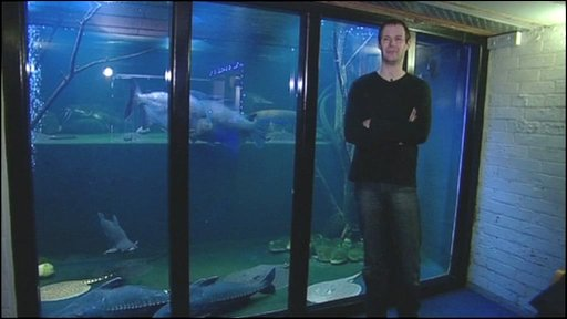 CBBC - Newsround - Man with a giant aquarium - in his house!