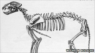Sketch of a cave lion skeleton (Image: Wilhelm Bölsche)