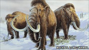 Woolly mammoths (image: Michael Longs / NHMPL)