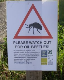National Trust sign warning walkers to watch out for oil beetles