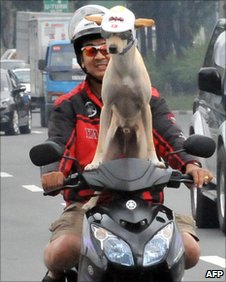 Filipino motorcyclist Gilbert and his dog Bogie on a scooter