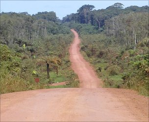 A road in the Congo basin, built to provide access for loggers (Image: Stephen Blake)
