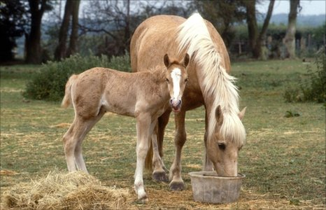 Horse and foal (Image: BBC)
