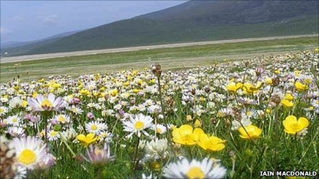 Machair on Western Isles