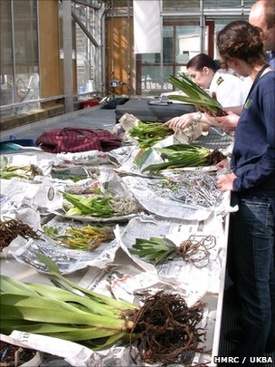 Experts examine a shipment of orchids (c) HMRC/UKBA