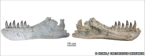 Jaw bones discovered
