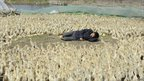 A worker takes a nap surrounded by ducklings at a duck farm on the outskirts of Jiaxing, Zhejiang province